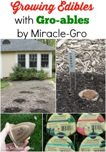Planting Gro-ables by Miracle-Gro