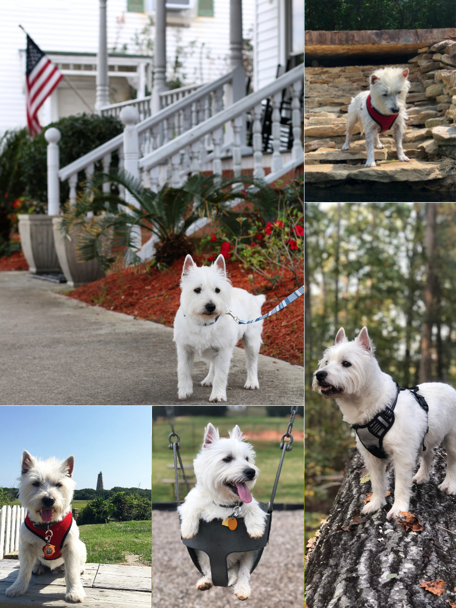 collage of dog