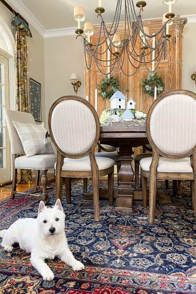 dog in dining room