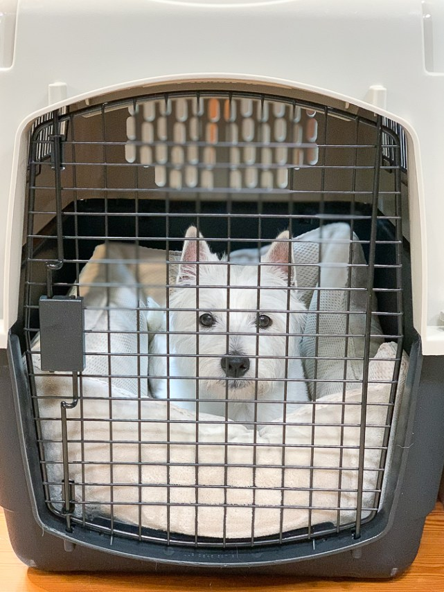 dog in a plastic kennel