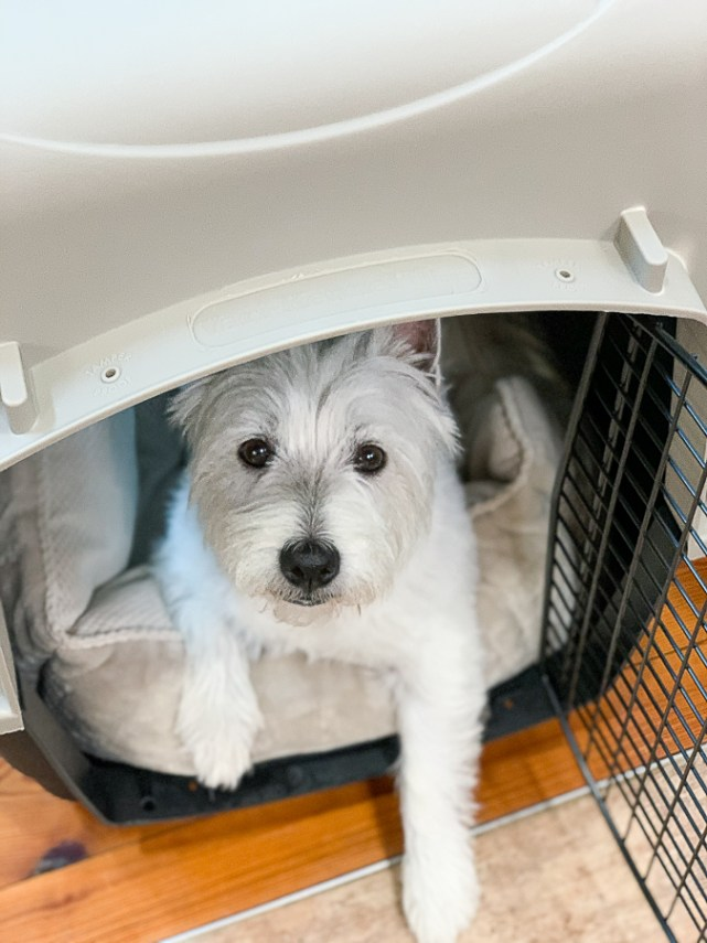 dog in a kennel