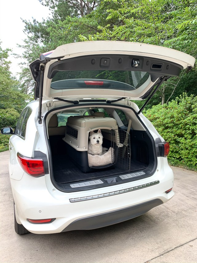 dog in a kennel in the back of a car
