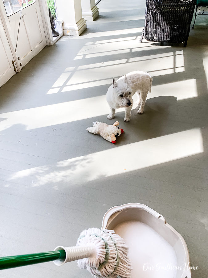 dog and mop