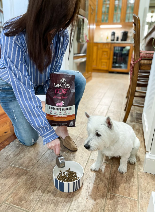 dog eating digestive health food