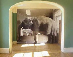 elephant_in_living_room
