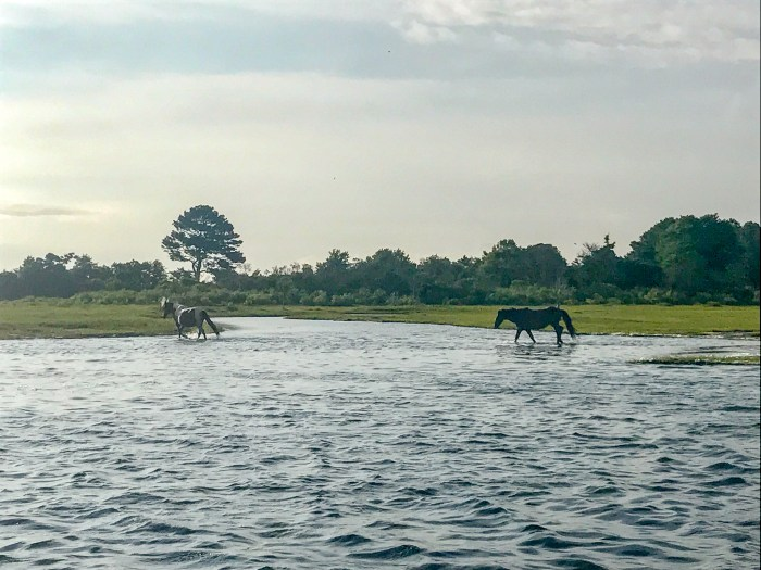 This view is why a sunrise cruise is one of the best things to do in Chincoteague.