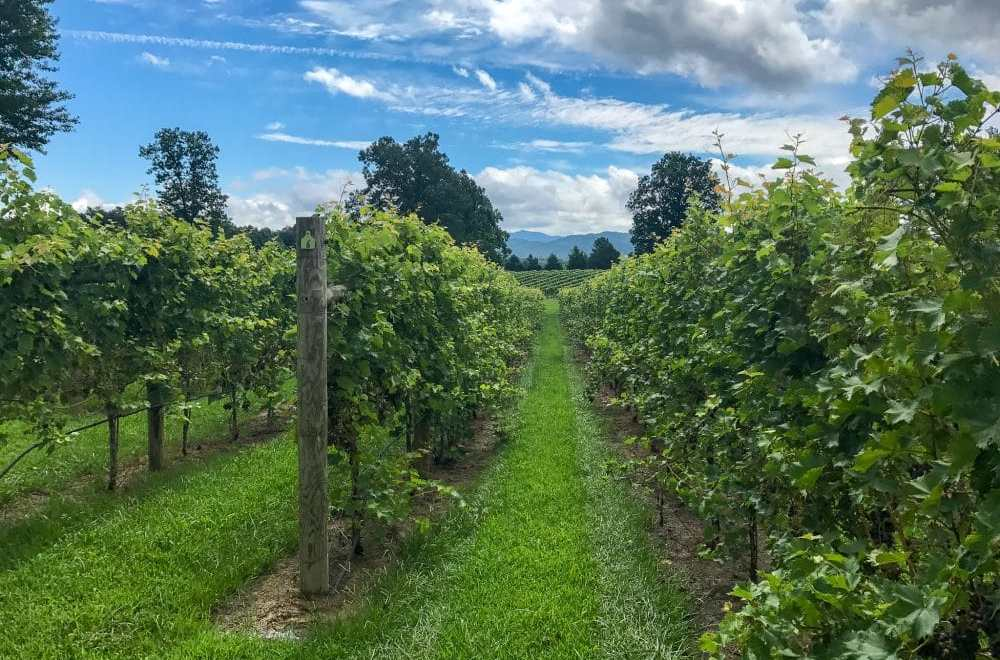 The Best Charlottesville Wineries on the Monticello Wine Trail