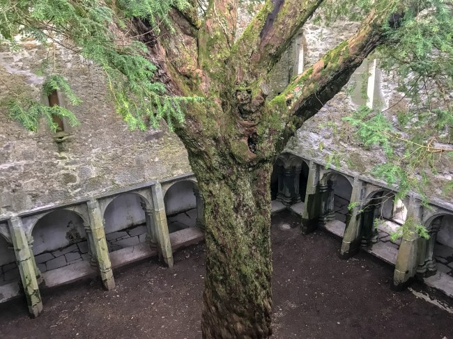 A true hidden gem in Ireland is Muckross Abbey. There is so much to explore within the ruined abbey that it will surely be the highlight of your trip in Ireland.
