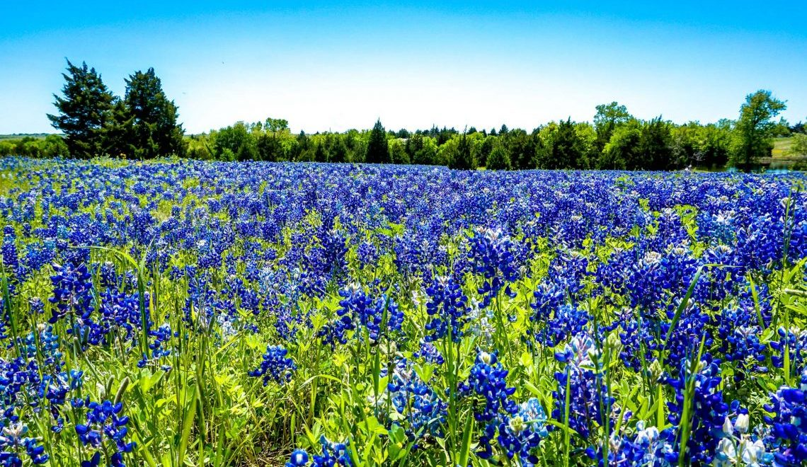 Ultimate Guide to Visiting the Ennis Bluebonnet Trail