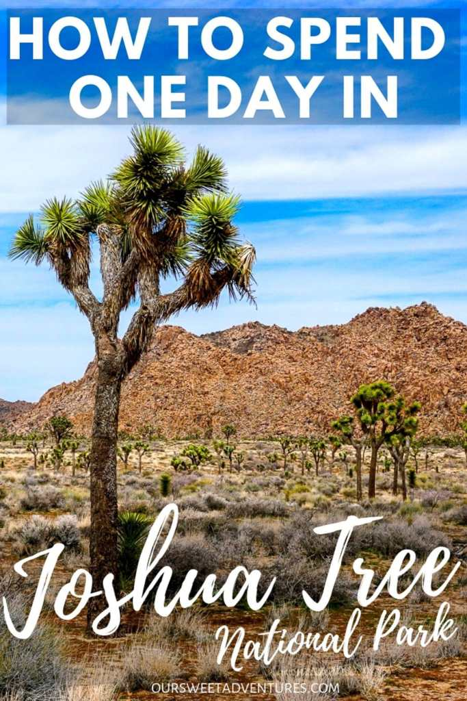 "A photo with a tall Joshua tree on the left side and several more in the background with text overlay ""How to Spend One Day in Joshua Tree National Park""."