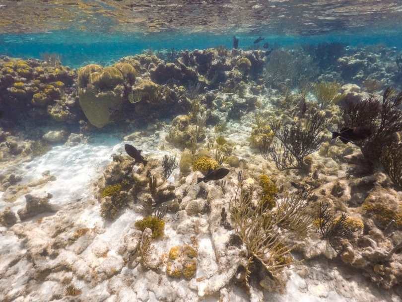 Coral reef and black fish.