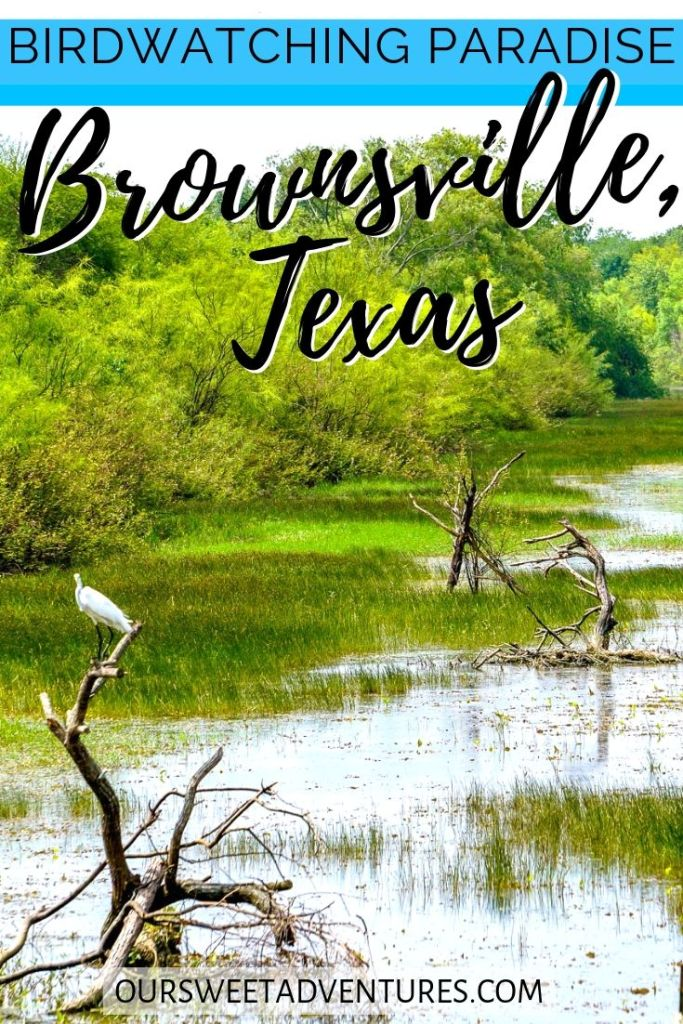 """A photo of a white crane perched on wood in the middle of a valley. Text overlay """"Birdwatching paradise Brownsville, Texas""""."""