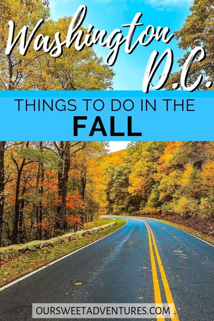 """A street bending in the road with towering vibrant fall foliage trees. Text overlay """"Washington D.C. Things to do in the Fall."""""""