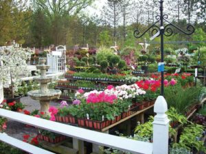 Colonial Acres Nursery