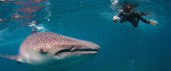 our-travel-dates-bucket-list-2015-oslob-cebu