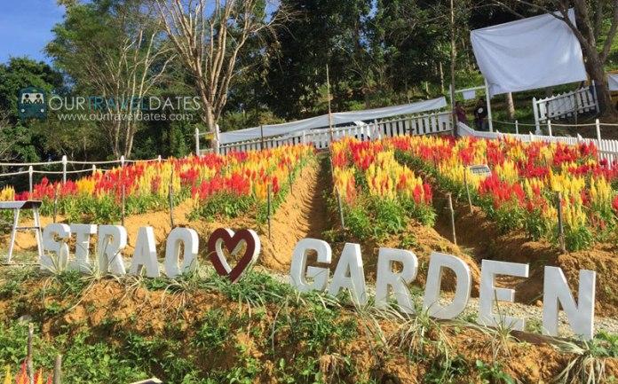 sirao-flower-garden-cebu-philippines-our-travel-dates-image5