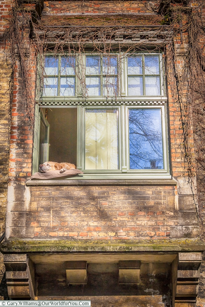 Let sleeping dogs lie, Bruges, Belgium