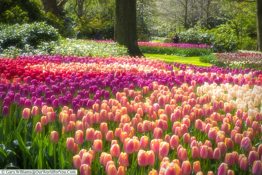 A quiet place to walk, Keukenhof, Holland, Netherlands