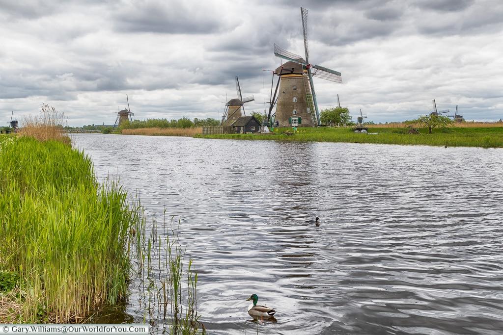Floating in front of the windmills, Kinderdijk, Holland, Netherlands