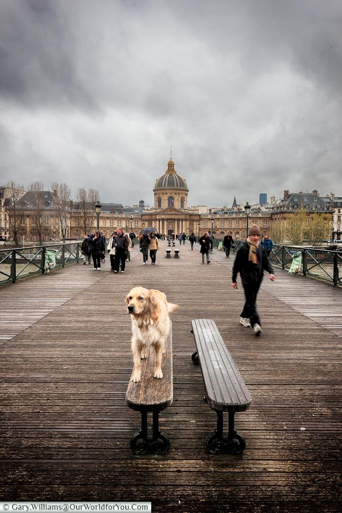 Walkies on the Pont des Arts, Paris, France