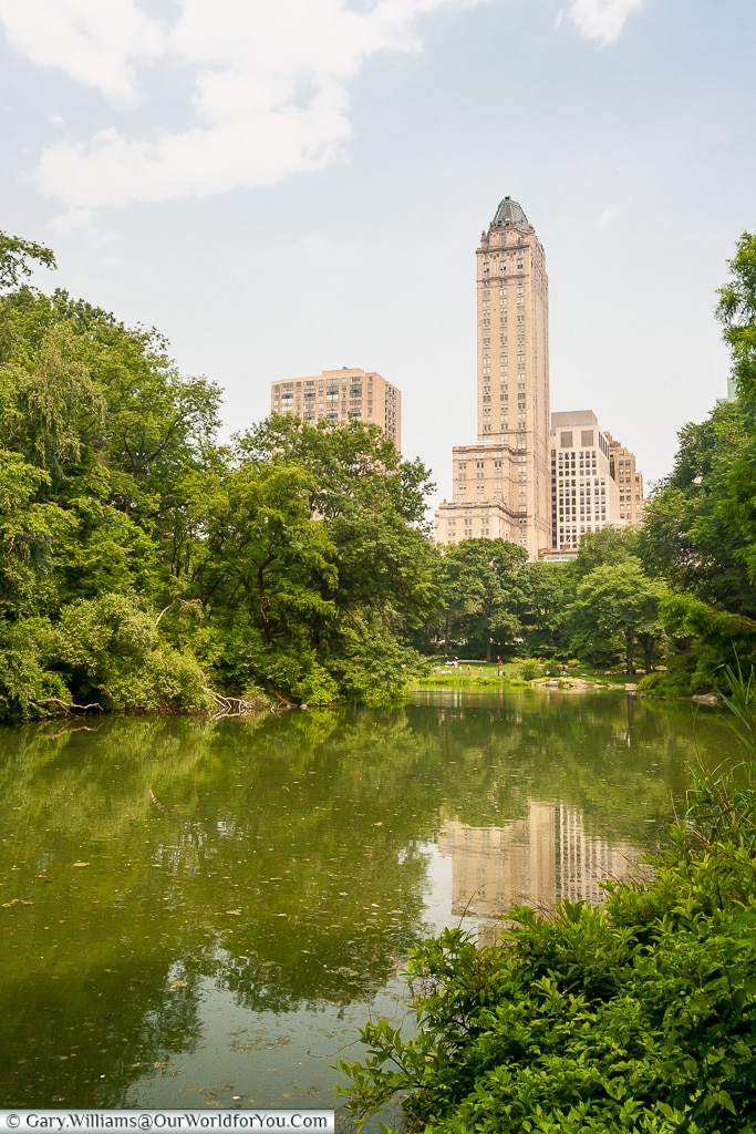Resting in Central Park, Manhattan, New York, USA