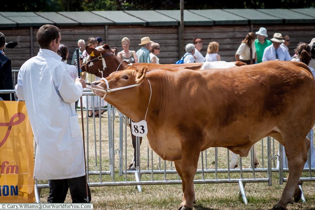 Big beast, Kent County Show, Kent, England, UK