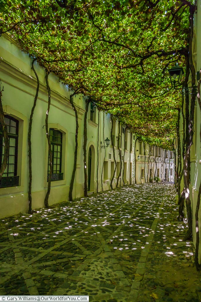 Vine covered lane in the Tio Pepe Bodegas tour at the Gonzalez Byass site, Jerez, Spain