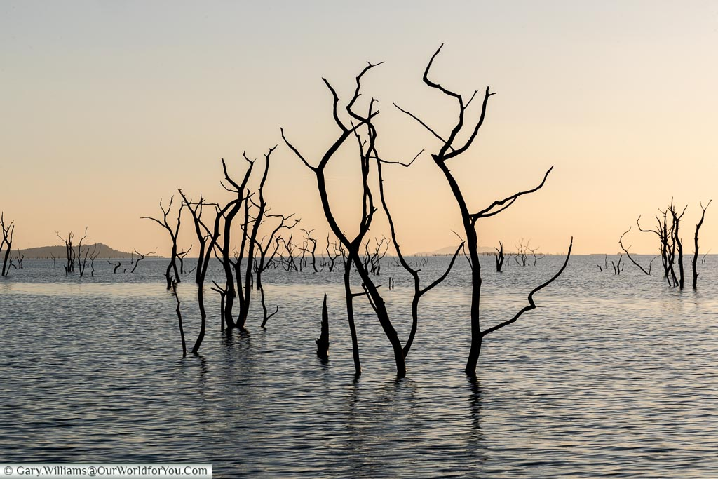 The sunken forrests of Lake Kariba, Zimbabwe, Africa