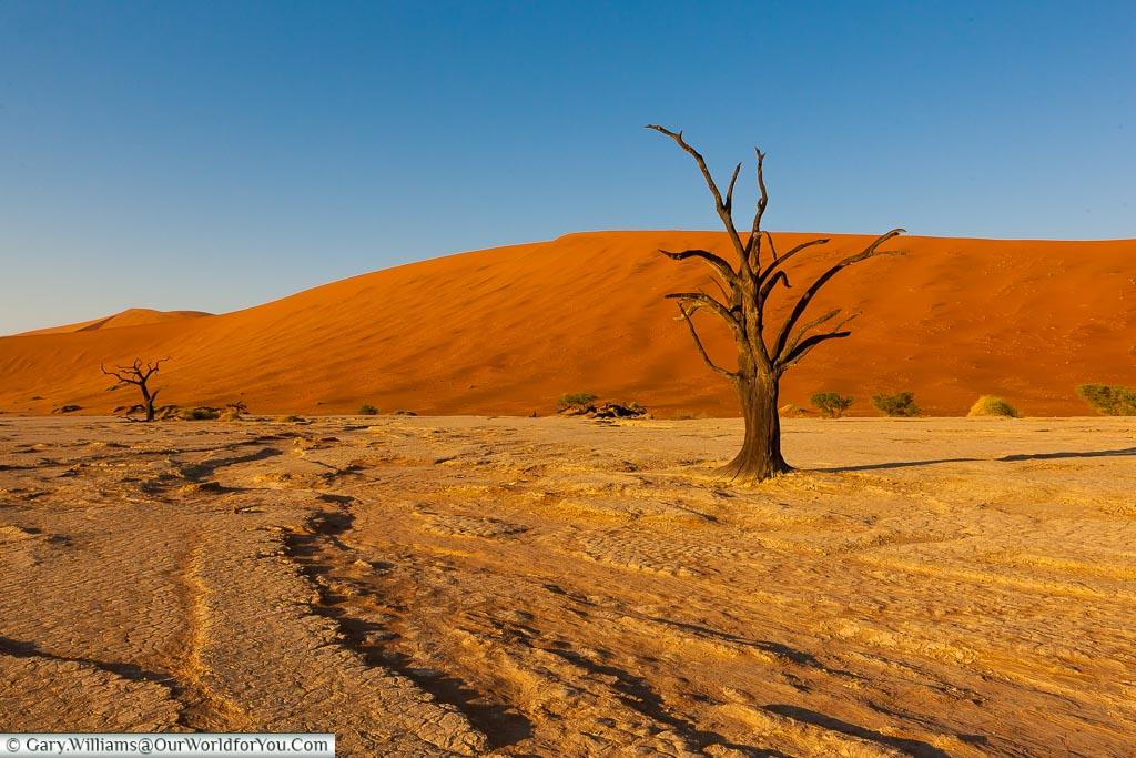Tracks in the pan of Deadvlei,  Sossusvlei, Namibia