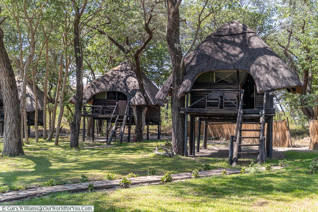 The thatched lodges of the camp, raised off the floor, built between the trees, with them growing through the structures.