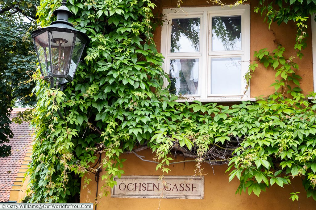 An old gas lantern attached to the side of an ochre-coloured building covered in a vine in  Ochsen Gasse in the Fuggerei