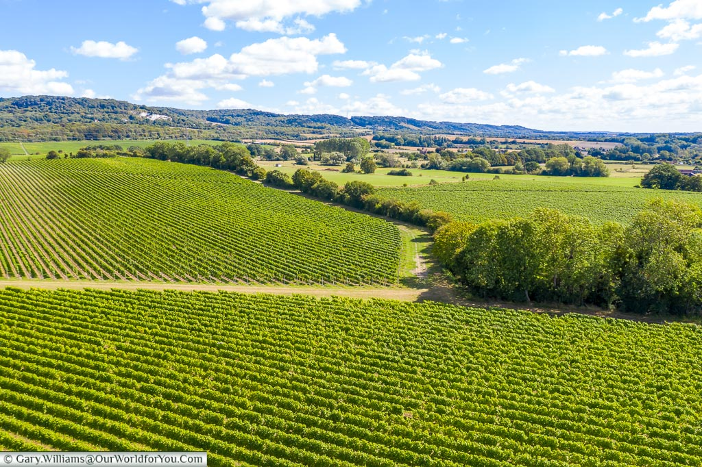 A patchwork of fields nearing harvest time of the Kits Coty vineyards from a drone 40 meters in the air.