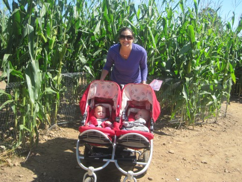 Braving the corn maze with babies at Lyman Orchards in Middlefield, CT.