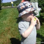 Apple Picking at Belltown Hill Orchards