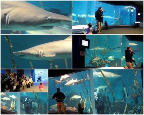Maritime Aquarium8