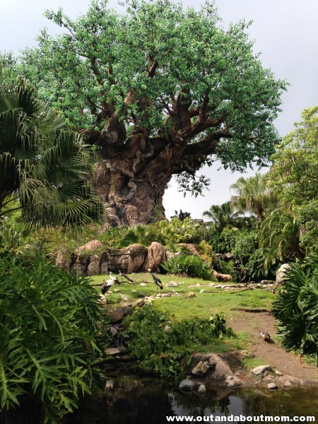 Each day, your base park tickets will gain you entry to one of four theme parks: Magic Kingdom, Disney's Hollywood Studios, EPCOT, and (as shown here) Disney's Animal Kingdom. Park Hopper tickets will allow you to move freely through the four parks as you wish.