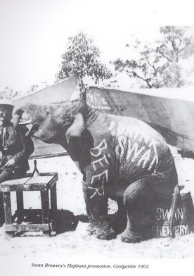 Swan Brewery Promotion with an elephant advertising beer, Coolgardie 1902
