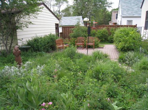 Out Back Nursery:: landscaping services:: Native Plant Gardens on Birds Backyard Landscapes  id=52179