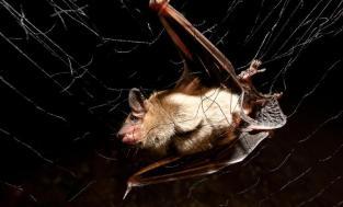 Alabama Bat Monitoring and Conservation | Outdoor Alabama