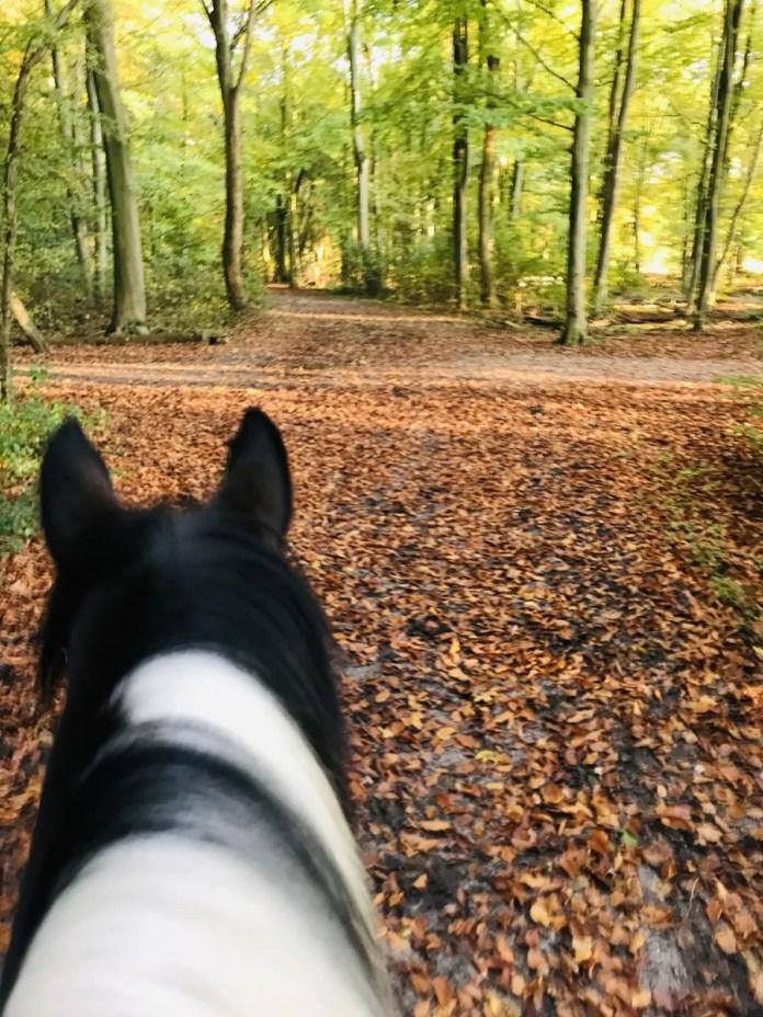 Tip! Ga vooral in de herfst naar het bos, want het is er dan prachtig. In de winter met een laagje sneeuw doet het trouwens ook goed.