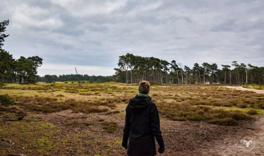 Wekeromse Zand. Foto: Edwin Hagenouw
