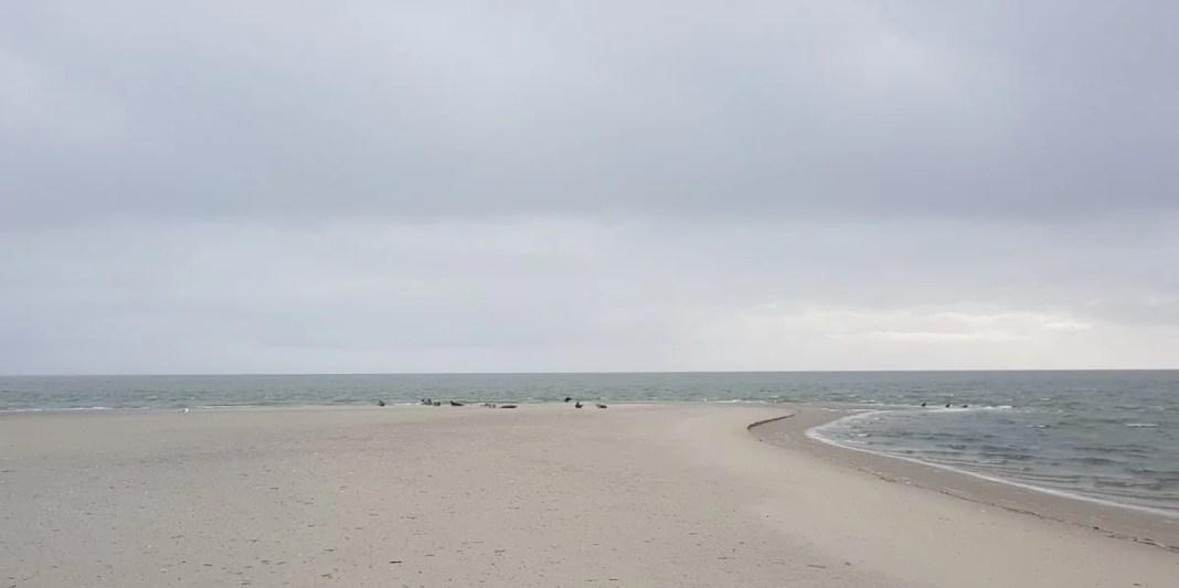 Oostelijke punt van Boschplaat