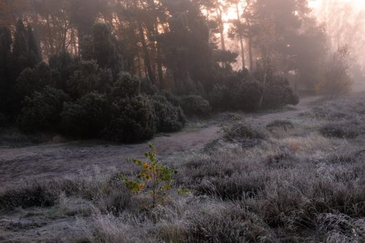 Westruper Heide. Foto: Vincent Croce