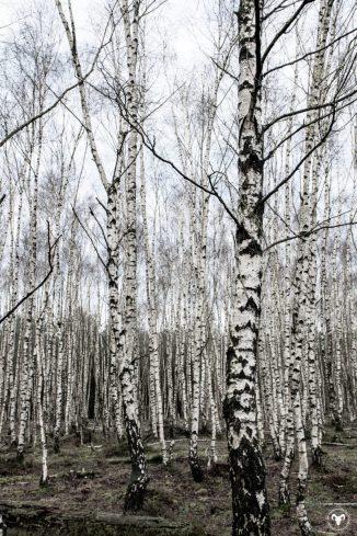 Planken Wambuis. Foto: Edwin Hagenouw