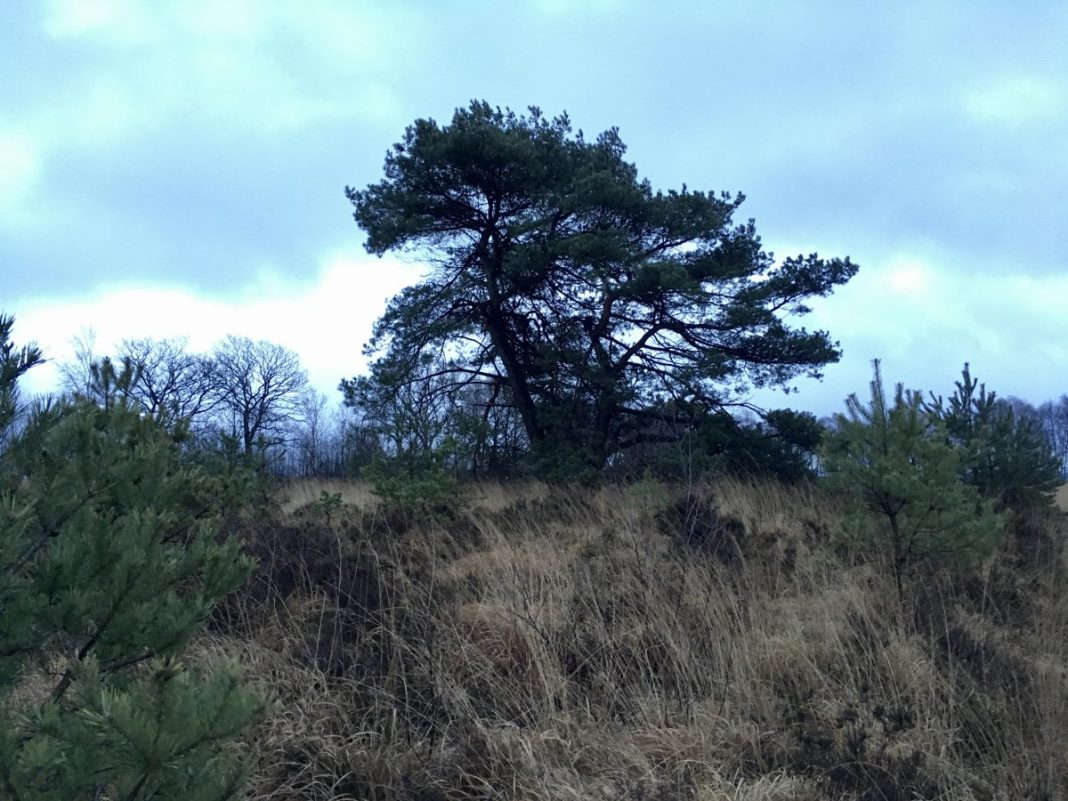 Natuurgebied in Friesland