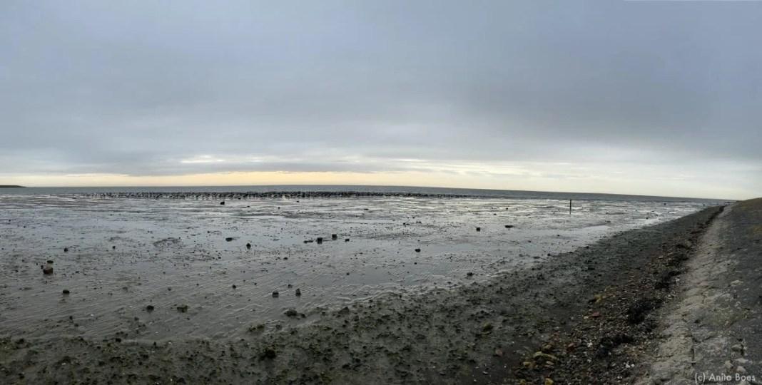 Honderden vogels bij Styperpolder op de Waddenzee.