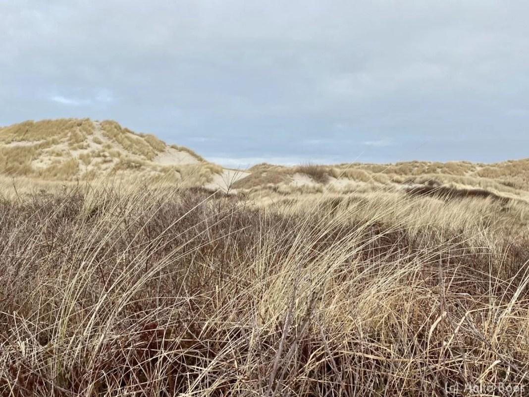 De duinen aan de noordkant van Terschelling bij de Boschplaat.