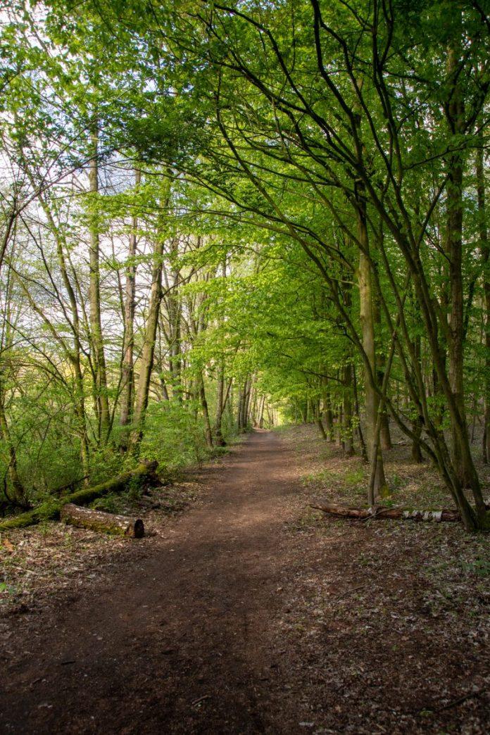 Wandelen door het Doorwerthse bos