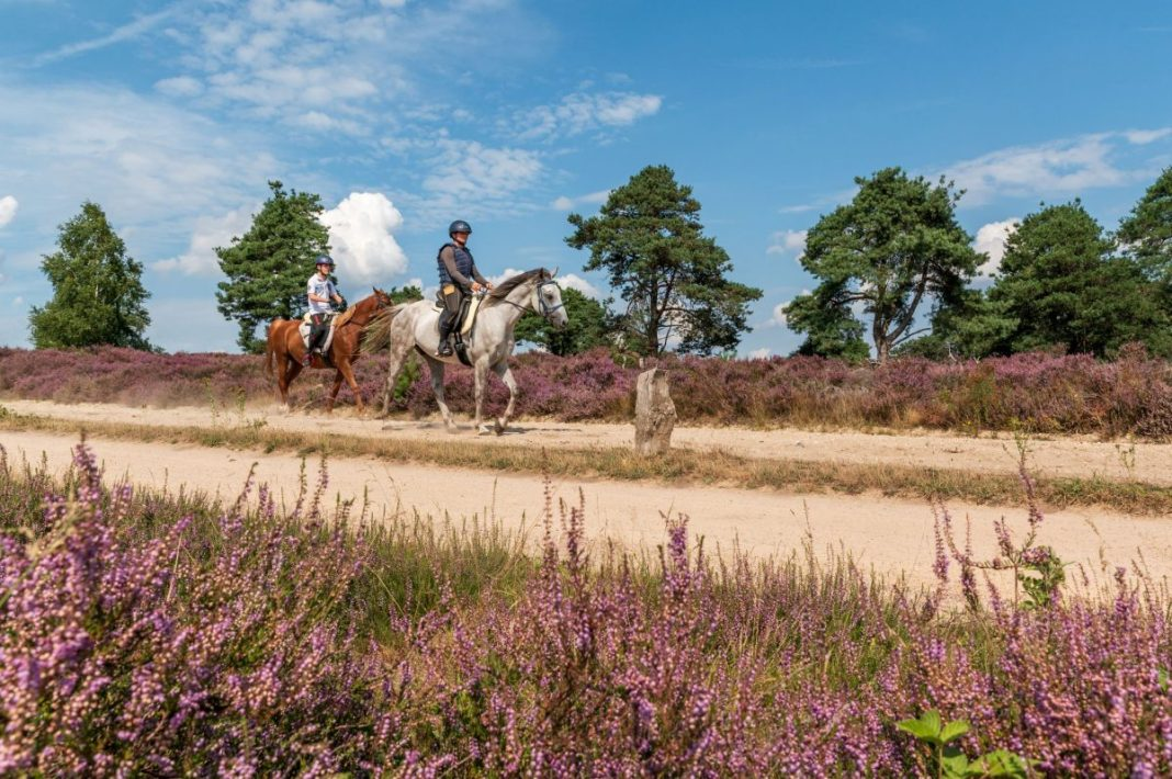 Paardrijden op de Sallandse Heuvelrug. Foto: Ellen van den Doel