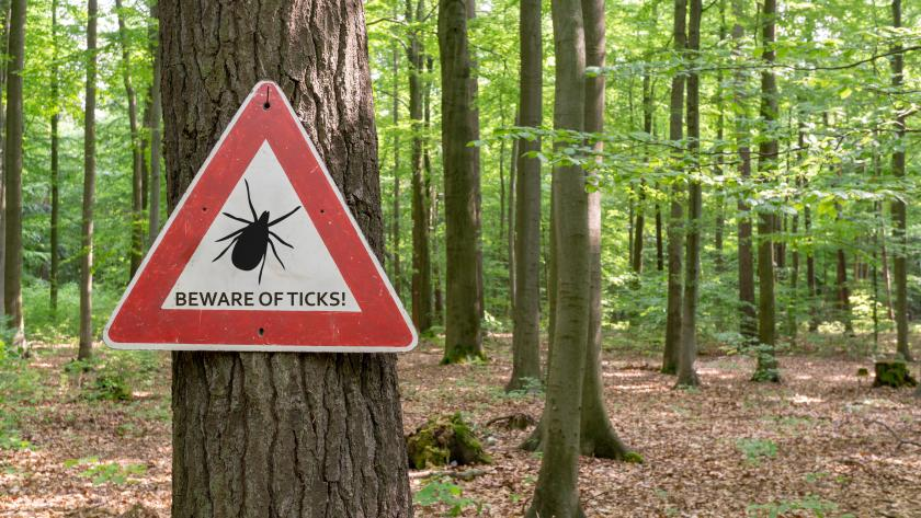 Tips for Preventing and Treating Tick Bites